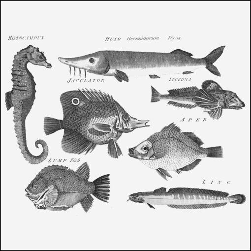 collage kit fish from Georgian Arts & Sciences Encyclopaedia