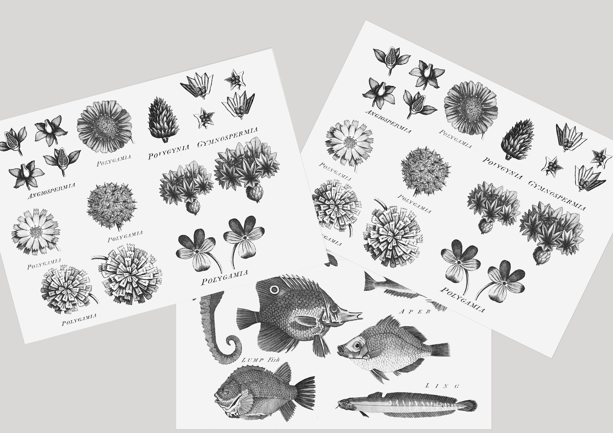 pages from 18th century encyclopaedia included in collage kits