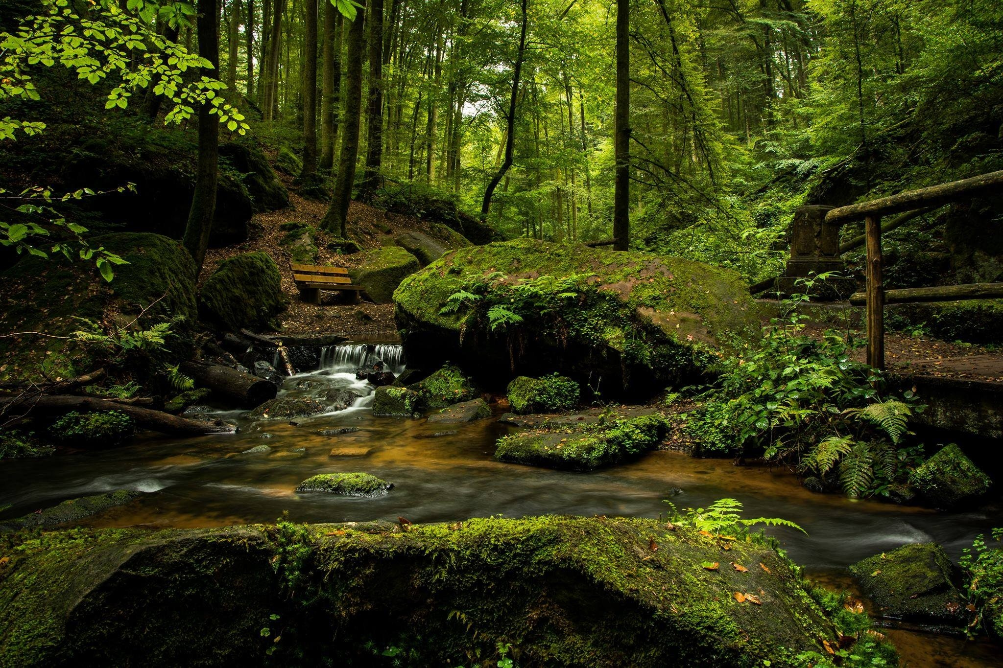 forest, green, woods