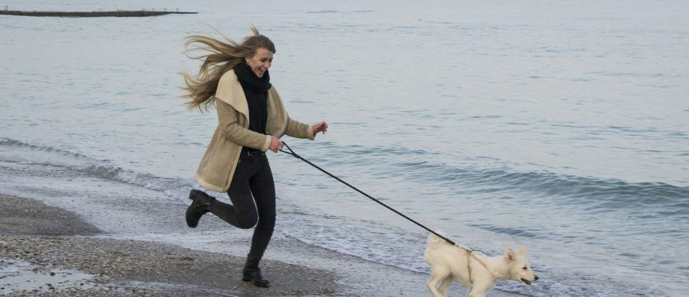 8 Reasons your dog training doesn't work