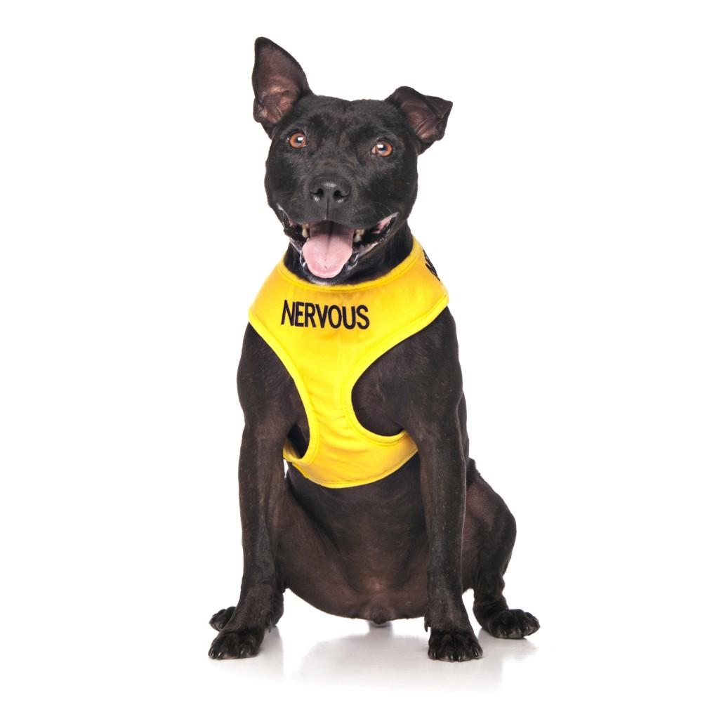 nervous dog vest harness large