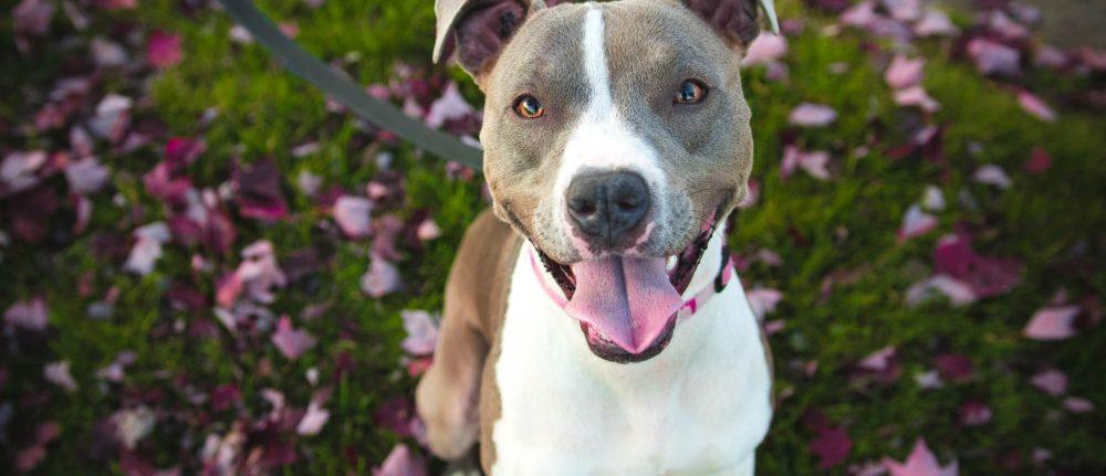 Learning Theory – 4 Quadrants Of Dog Training