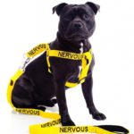 nervous dog strap harness