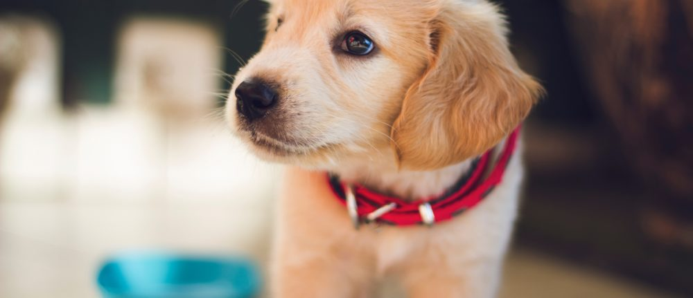 Is your puppy socialisation strategy creating future behaviour problems?