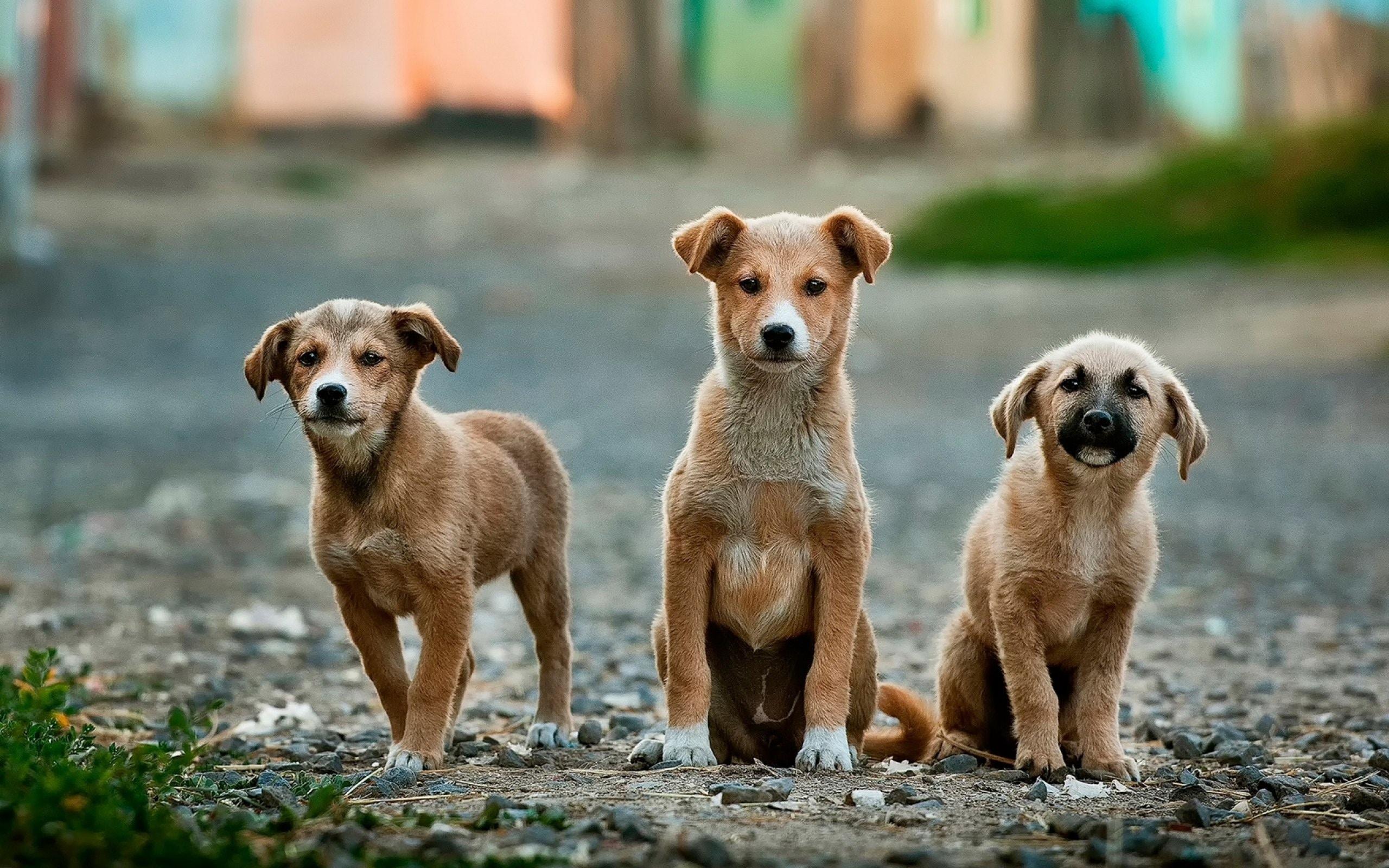 proofing dog behaviour