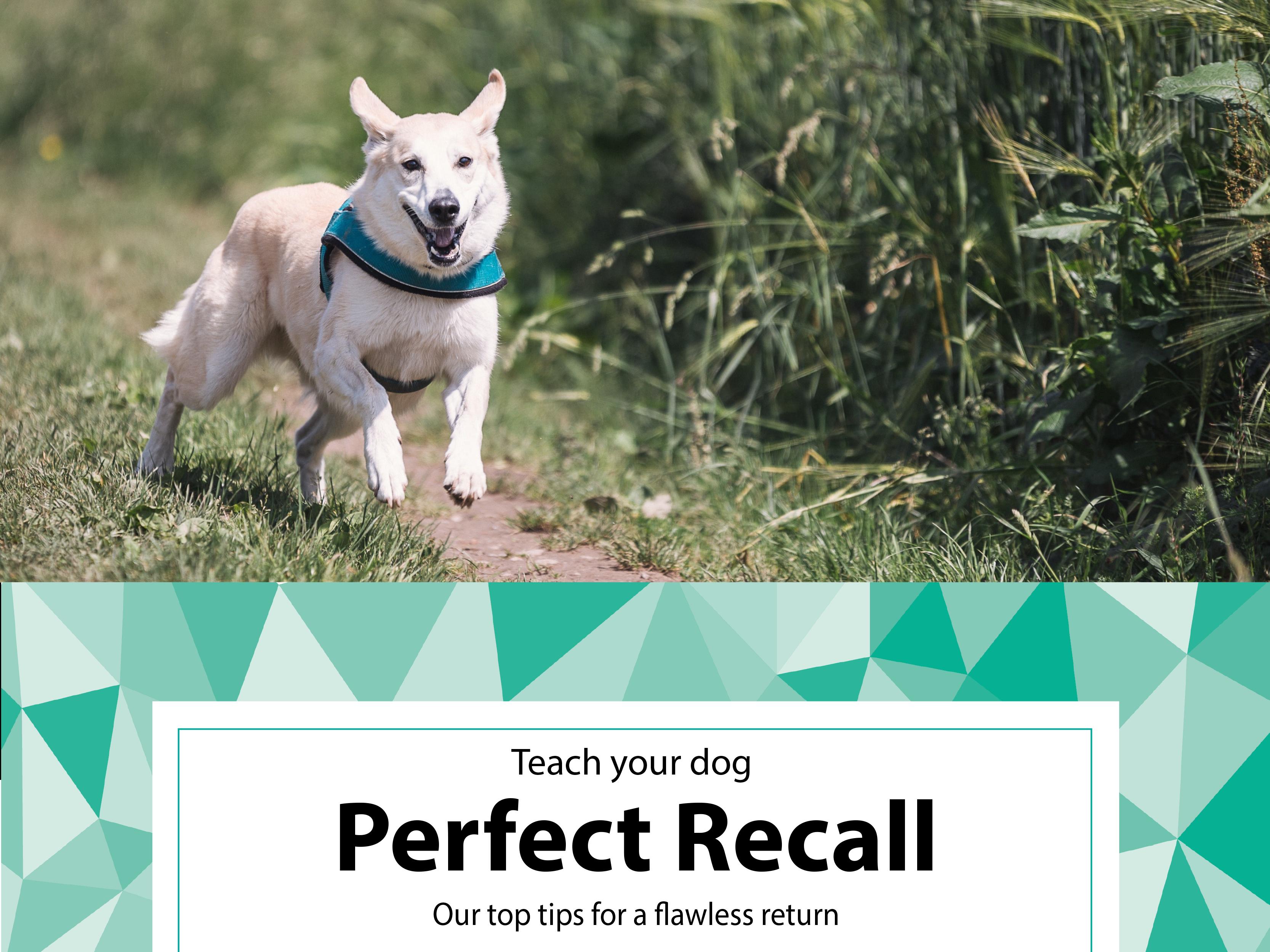 dog recall training book