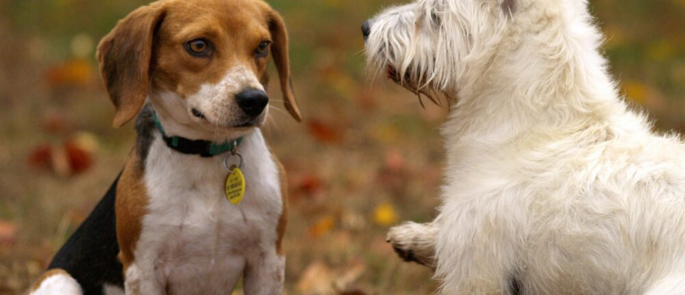 If an owner asks you to recall your dog, respect their wishes – Dog Training Tips