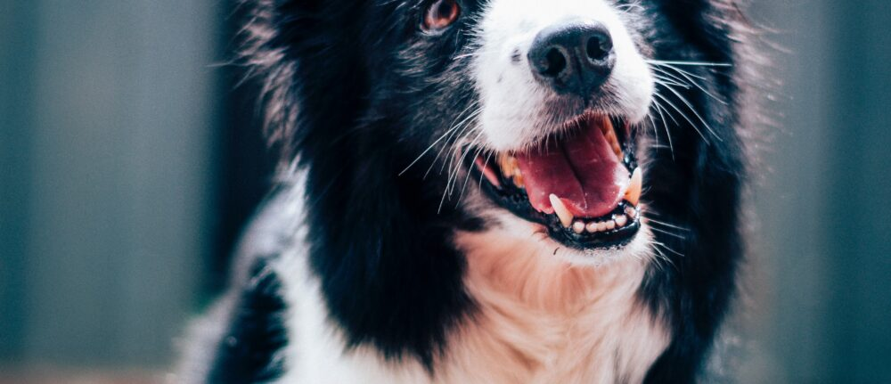 Giving Your Dog's Happiness a Boost
