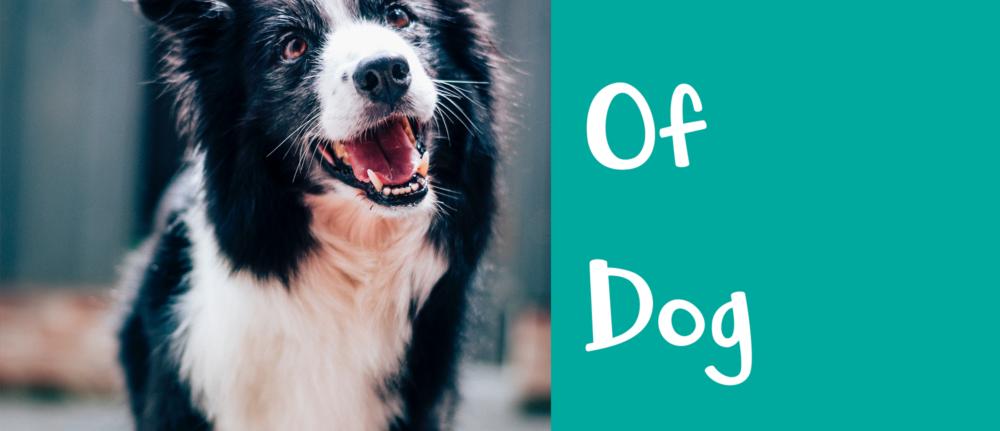 Basics Of Dog Training – Dog Trainer Tips