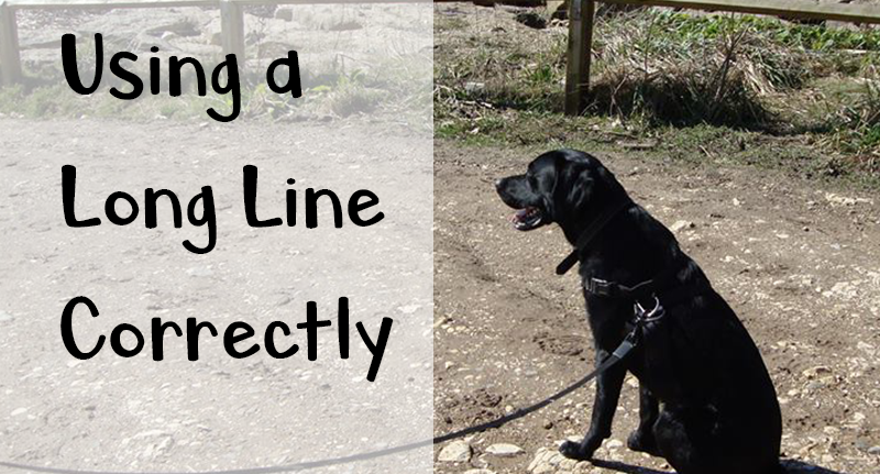 Using a long line correctly – Dog trainer tips