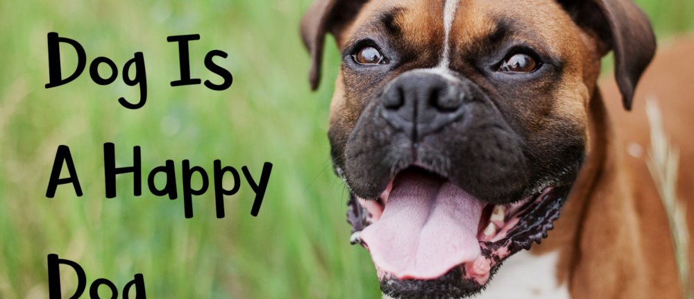 A Well Trained Dog Is A Happy Dog – Dog Training Tips
