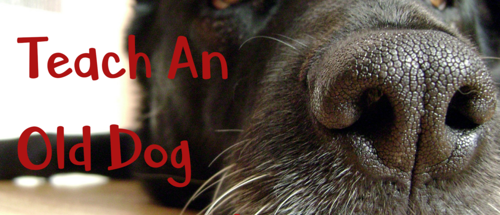 You CAN Teach An Old Dog New Tricks – Dog Trainer Tips