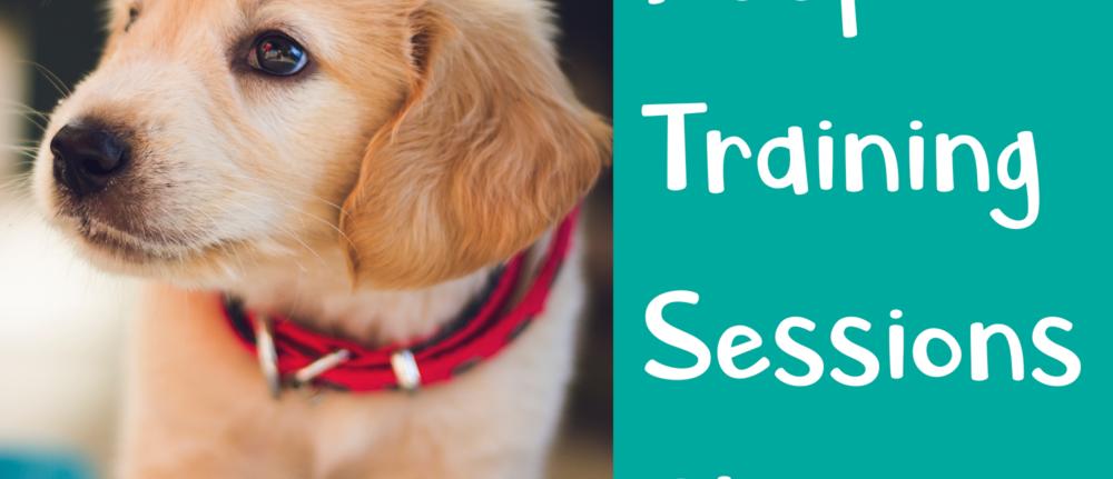Keep Training Session Short – Dog Training Tips