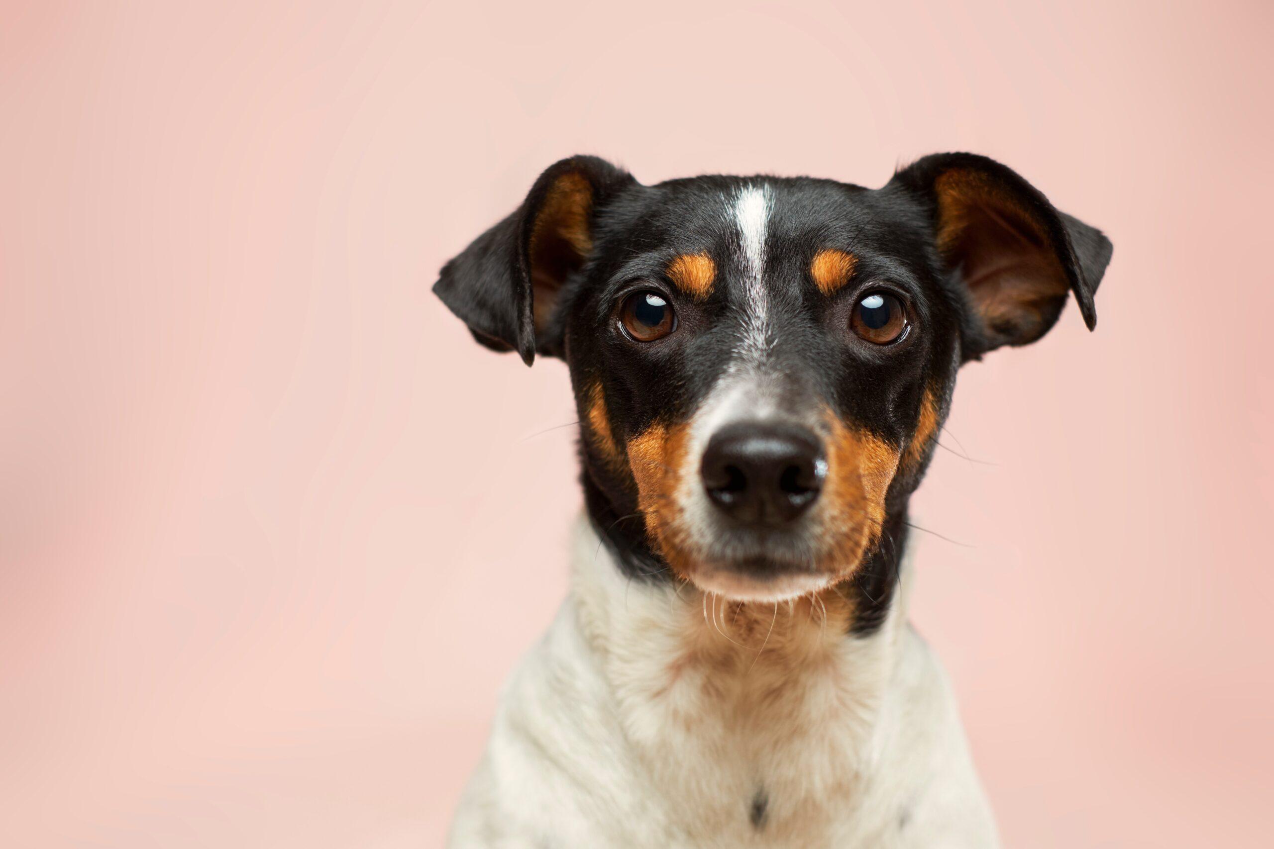 dog trainer leeds