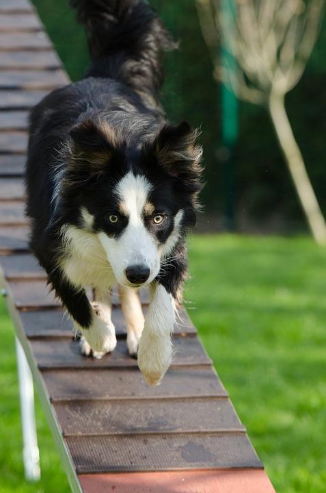 dog training leeds