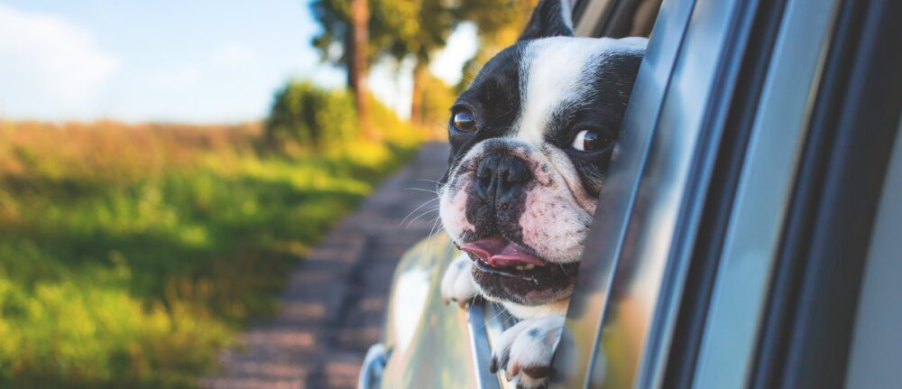 3 Tips For Finding The Best Car For Dog Owners