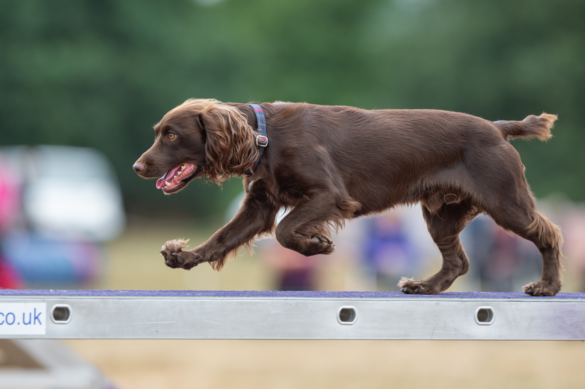 what are dog agility classes
