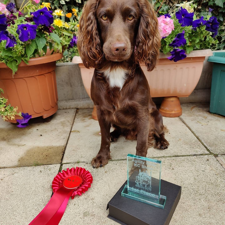 dog agility win