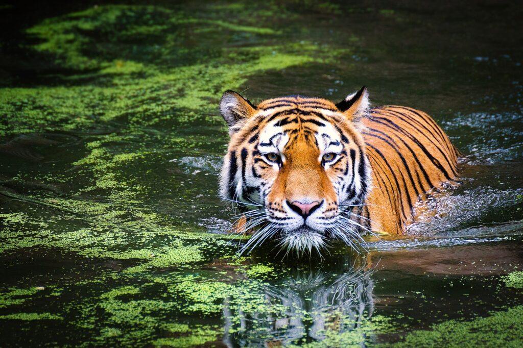 Rajasthan Trip : Ranthambore National Park