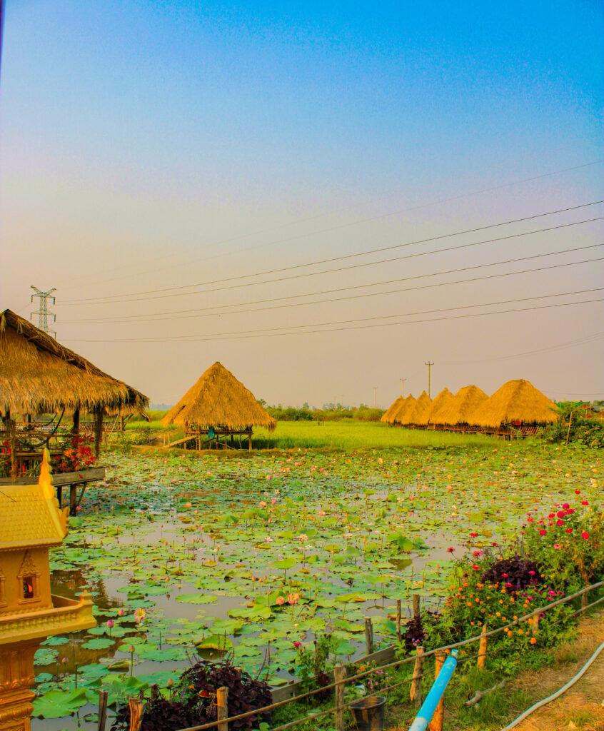 Lotus Farm near Siem Reap