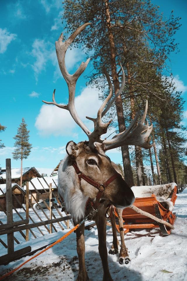 Rovaniemi, Finland with snow