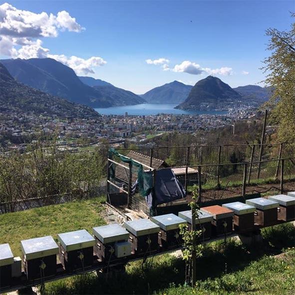 Honig aus der Schweiz