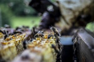 beekeeper_apitherapie