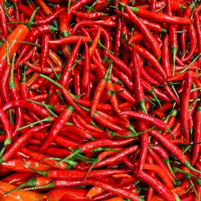 Rote Chilli