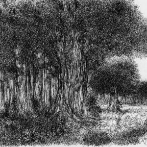 Sketch on paper with pen and ink of trees.