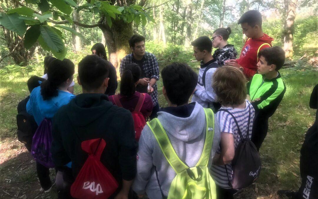 Itinerarios botánicos por los castaños de Redes