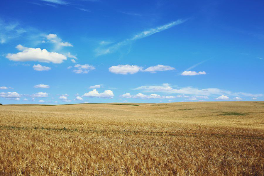 Gluten, wheat and PCOS