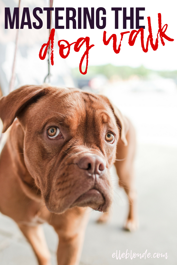 Looking after your dog, dog blog tips and guide to a healthy animal | Elle Blonde Luxury Lifestyle Destination Blog