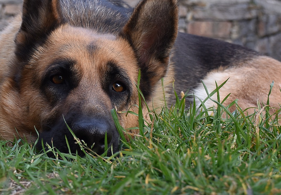 CBD oils in Dogs | How to use CBD safely | Dog Blog | Elle Blonde Luxury Lifestyle Destination Blog