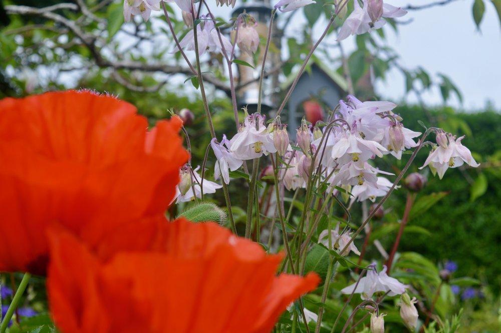 poppies_boxwild_bird_box_springwatch_elle_blonde_luxury_lifestyle_blog