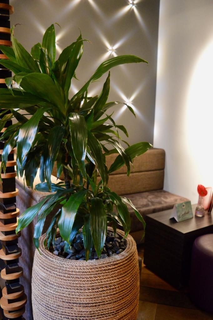 Palm-Plant-SoHe-Cocktail-Bar-Asian-Restaurant-Jesmond-Newcastle-Elle-Blonde-Luxury-Lifestyle-Blog