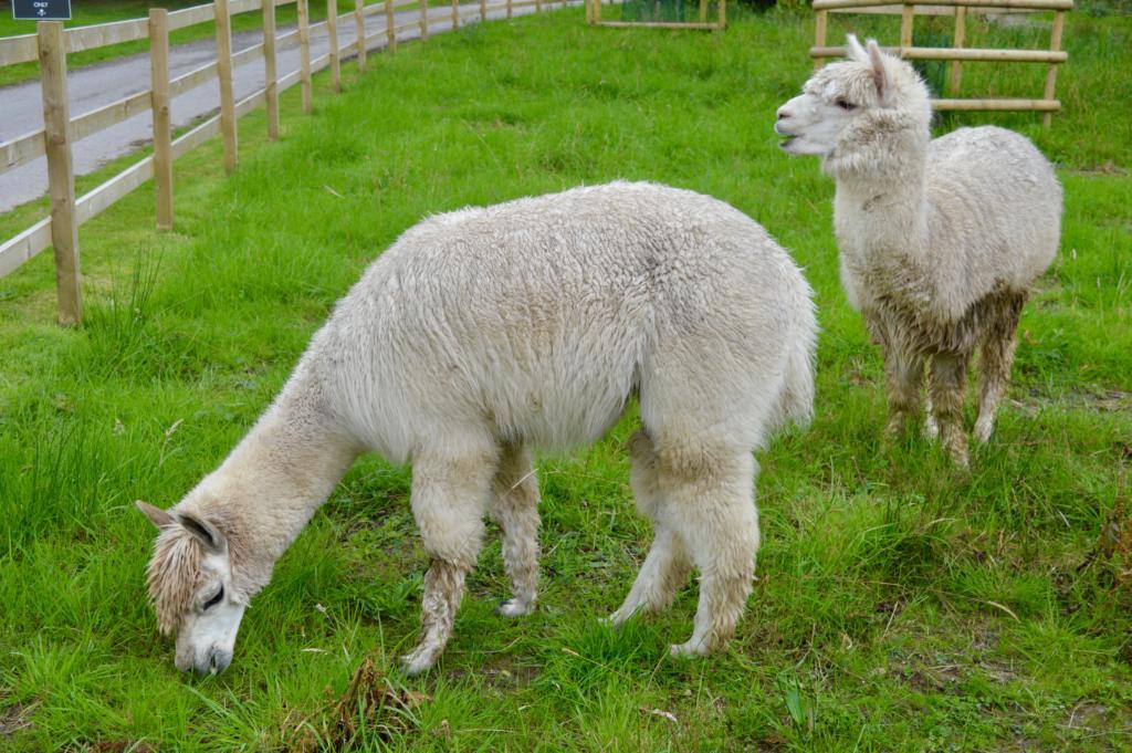 Alpaca-Vauxhall-Crossland-X-The-Lingholm-Kitchen-Estate-Keswick-Lake-District-Elle-Blonde-Luxury-Lifestyle-Destination-Blog