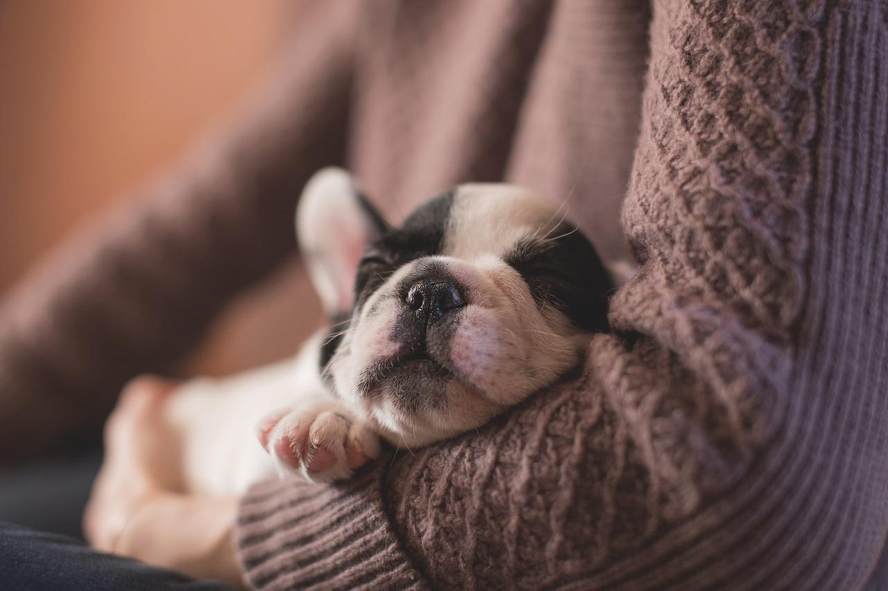 Keeping your dog from parasites | Dog Blog | Elle Blonde Luxury Lifestyle Destination Blog