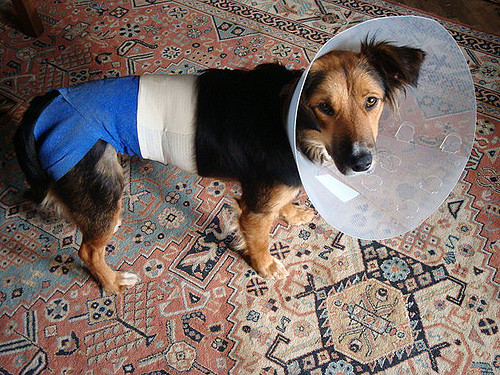 How to Treat Your Dog After Surgery 1