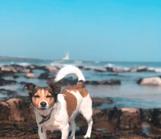Petplan Pethood Stories - Pet Census 2018 discovering the UK's pet habits | Dog Blog | Elle Blonde Luxury Lifestyle Destination Blog