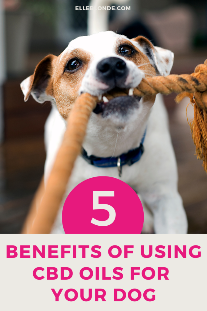 CBD oils for dogs and the benefits of using CBD for dog's health issues   Dog Blog   Elle Blonde Luxury Lifestyle Destination Blog
