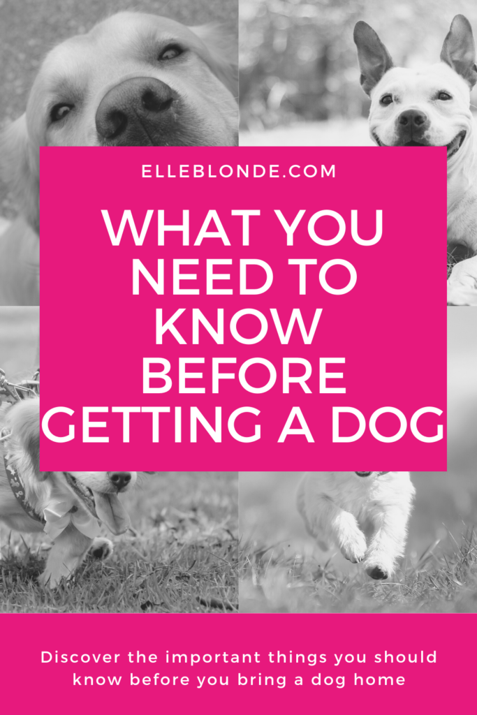 3 Things To Think About Before Getting A Dog | Dog Blog | Elle Blonde Luxury Lifestyle Destination Blog