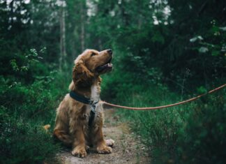 8 Pros & Cons To Think About When Getting A Dog | Dog Blog | Elle Blonde Luxury Lifestyle Destination Blog