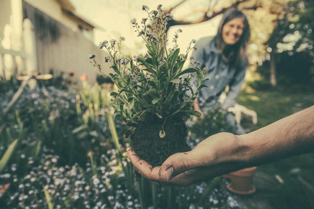 Advantages Of Using Worm Castings | Gardening Inspo | Elle Blonde Luxury Lifestyle Destination Blog