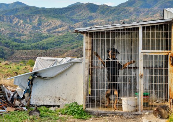 The abolition of all cages of shame (Dogs in cages)