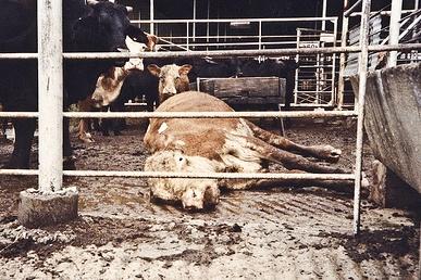 Διαδικασίες παρακολούθησης σφαγείων και μεταφορές / μεταφορά από μονάδες κτηνοτροφίας