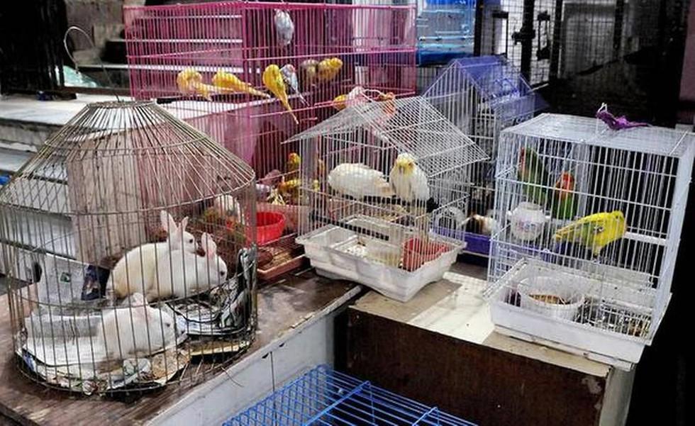 ΚΑΤΑΣΤΗΜΑΤΑ ΠΩΛΗΣΗΣ ΖΩΩΝ (PETSHOPS) Παρακολούθηση της ανάπτυξης και εφαρμογής της νομοθεσίας και της πλήρους απαγόρευσης της πώλησης ζώων