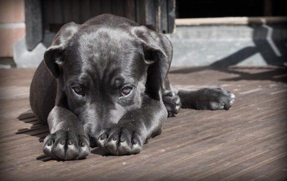 4η Απριλίου 2021 Παγκόσμια μέρα για τα εγκαταλελειμμένα και αδέσποτα ζώα