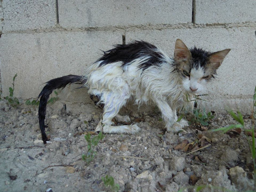 Creation of a special fund to cover the veterinary expenses of animals injured on the streets