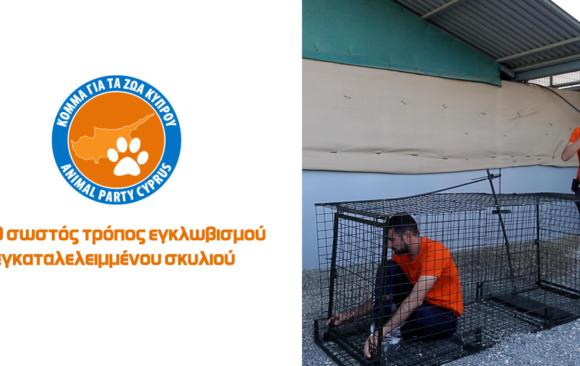 Ο σωστός τρόπος εγκλωβισμού εγκαταλελειμμένου σκυλιού