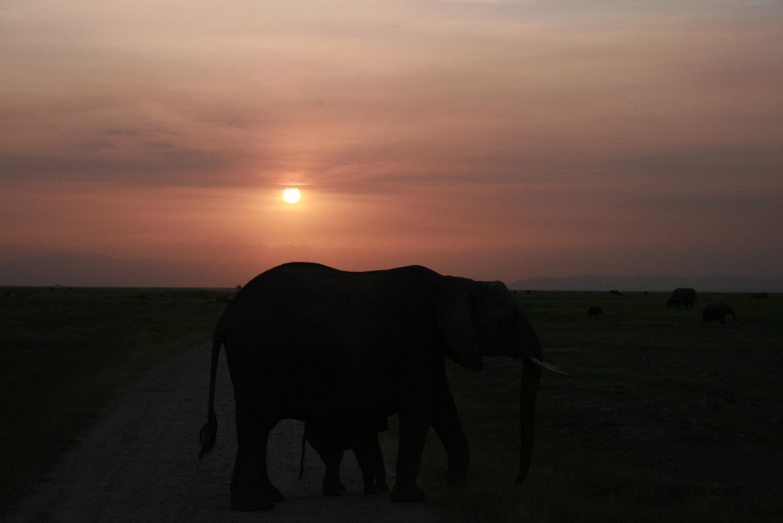 Sunset at Amboseli